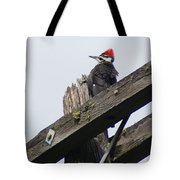 Pileated Woodpecker On A Power Pole Tote Bag