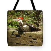 Pileated Woodpecker1 Tote Bag