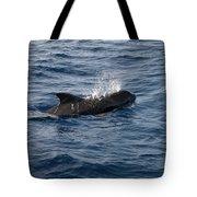 Pilot Whale 6 Tote Bag
