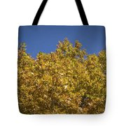 Pin Oaks In The Fall No 2 Tote Bag