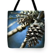 Pine Cones On Dry Branch Tote Bag