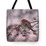 Pine Grosbeak Tote Bag