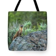 Pine Marten With Attitude Tote Bag