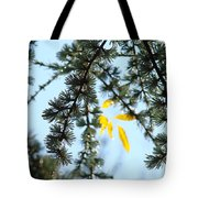 Pine Tree Art Prints Blue Sky Yellow Fall Leaves Tote Bag