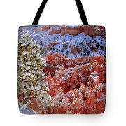 Pine Tree In Bryce Canyon Tote Bag