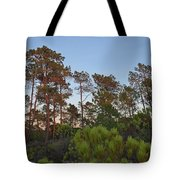 Pine Trees Waiting For Twilight Tote Bag