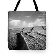 Pineapple Field - Bw Tote Bag