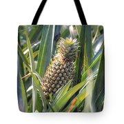 pineapple plantation in Kerala - India Tote Bag