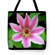 Pink And White Clematis Tote Bag