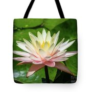 Pink And White Water Lily Tote Bag