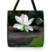 Pink And White Water Lily With Green Pod Tote Bag
