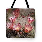 Pink Cactus Flowers 2 Tote Bag