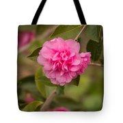 Pink Camellia 2 Tote Bag