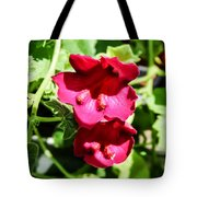 Pink Creeping Gloxinia Tote Bag