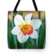 Pink Cup Solo Daffodil Tote Bag