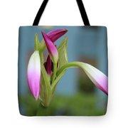 Pink Lily Bud Tote Bag