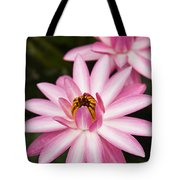Pink Lotus Blossoms Tote Bag