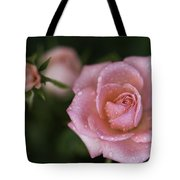Pink Miniature Roses 3 Tote Bag