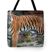 Pink Nosed Tiger Tote Bag