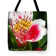 Pink Peruvian Lily 1 Tote Bag