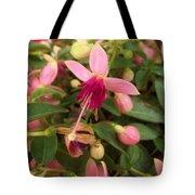 Pink Petalled Fuchsia Blooms              May         Indiana Tote Bag
