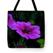 Pink Petunia, Dusk, Hunter Hill, Hagerstown, Maryland, July 25,  Tote Bag