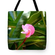 Pink Plumeria In Bloom Tote Bag