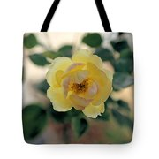 Pink Tipped Yellow Rose Tote Bag