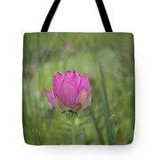 Pink Waterlily Bud Tote Bag