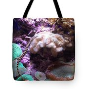 Pipe Fish And Sea Anemone  Tote Bag