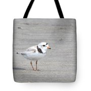 Piping Plover Tote Bag