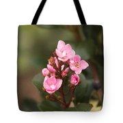 Pittosporum Pink 2 Tote Bag