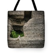 Plant Growing In Wall Tote Bag