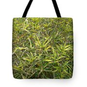 Plant Power 9 Tote Bag by Eikoni Images
