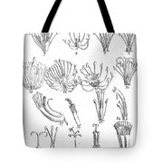 Plant Sexual Systems, Carl Linnaeus Tote Bag