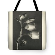 Plant Studies, 1928, Nature Series, By Karl Blossfeldt  Tote Bag