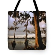 Plantation Gardens, Cypress Trees Tote Bag