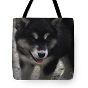 Playful Alusky Puppy Dog Ready To Pounce Tote Bag