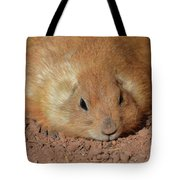 Plump Resting Prairie Dog Laying Down Tote Bag