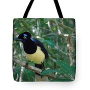 Plush-crested Jay   Cyanocorax Chrysops Tote Bag