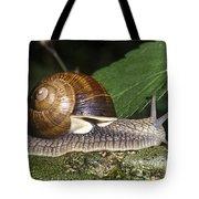 Pneumostome Of A Burgundy Snail Tote Bag