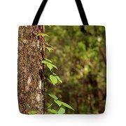Poison Ivy Climbing Oak Tree Trunk Tote Bag
