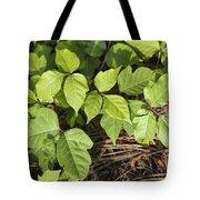 Poison Oak Vine - Toxicodendron Tote Bag