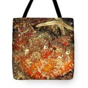 Poisonous Stone Fish, Scorpaena Mystes Tote Bag
