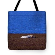 Polar Bear Rolling In Tundra Grass Tote Bag