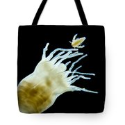 Polyp Of A. Aurita Jellyfish, Lm Tote Bag