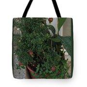 Pomegranate In The Pot Greece  Tote Bag