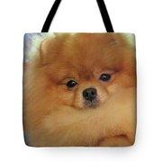 Pomeranian Dog  Tote Bag