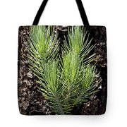 Ponderosa Pine 4 Tote Bag
