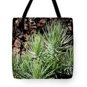 Ponderosa Pine 7 Tote Bag